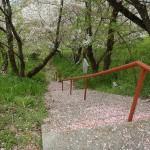 車でなければこの階段登ってくることになります