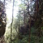 大岩の迫り出しとアケボノツツジ