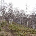 s-552牧場に沿って白樺林登る3