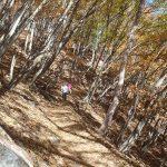 自然林を登る登山者