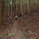 最初は杉林のキツイ登りです