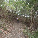 此処いらは自然林の気持ちのいい登山道です